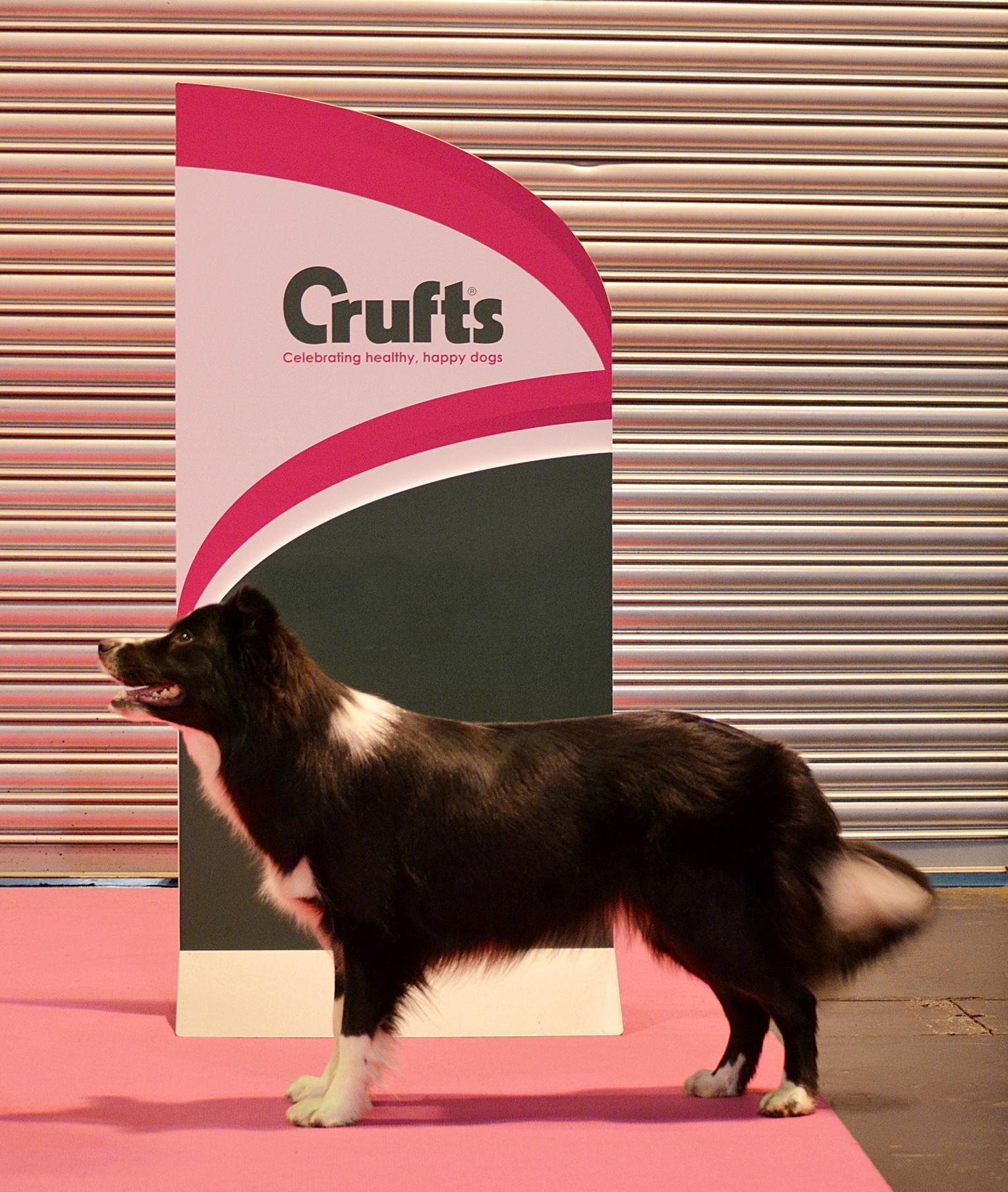 Mica Crufts 2016