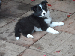 Pups20151231-6