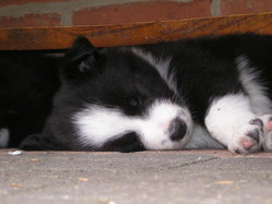 pups_and_people_010