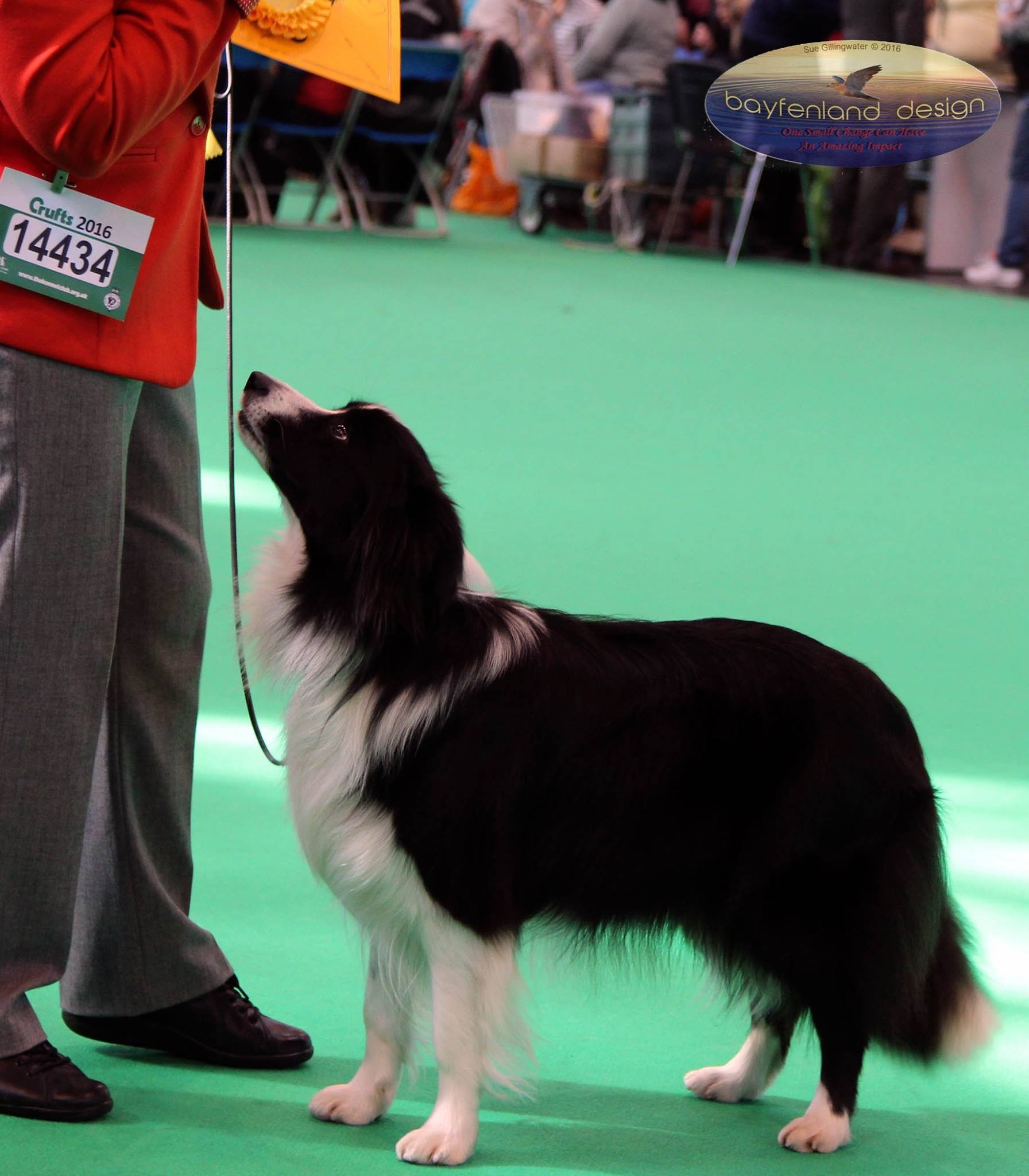 Shelby Crufts 2016 2