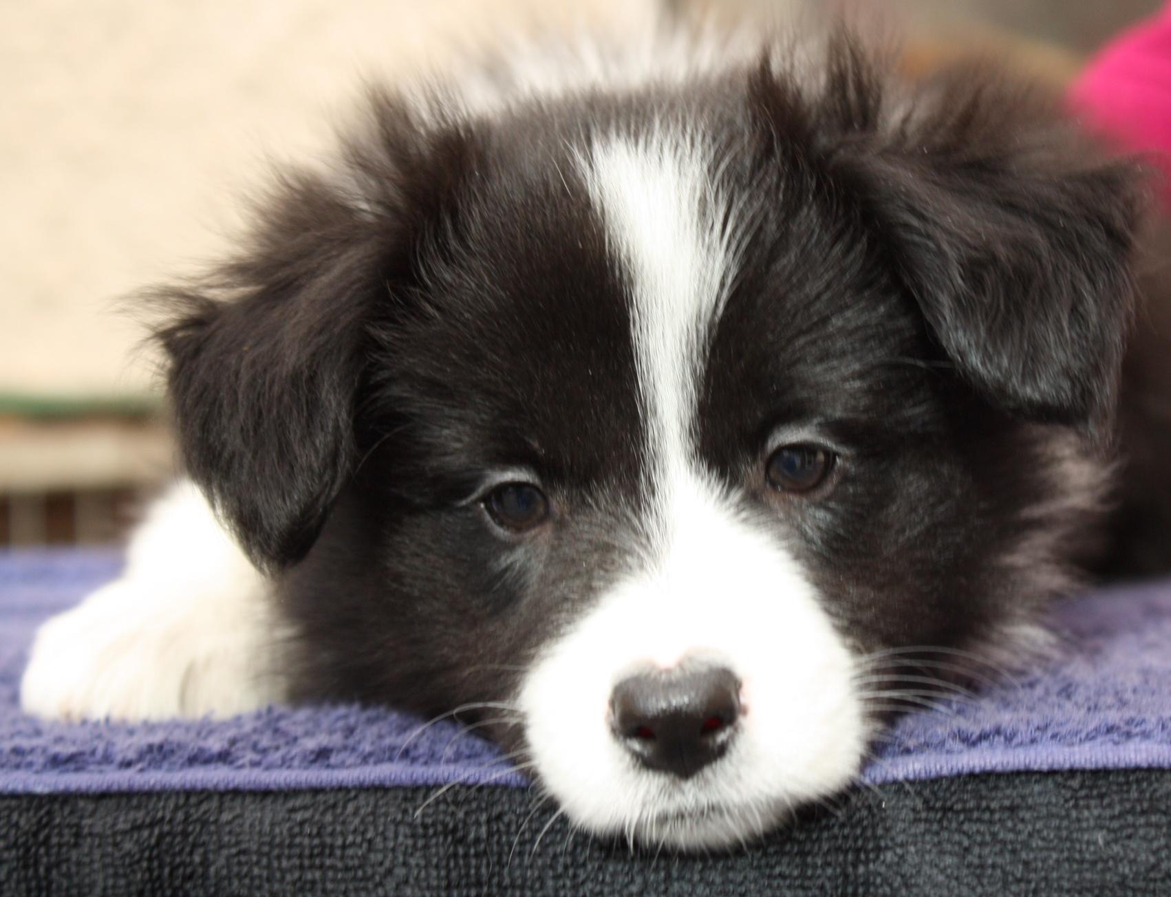Pups20151231-3