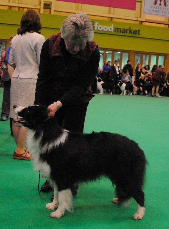 Scirocco Crufts 2012