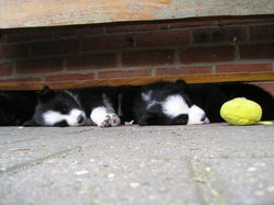 pups_and_people_046