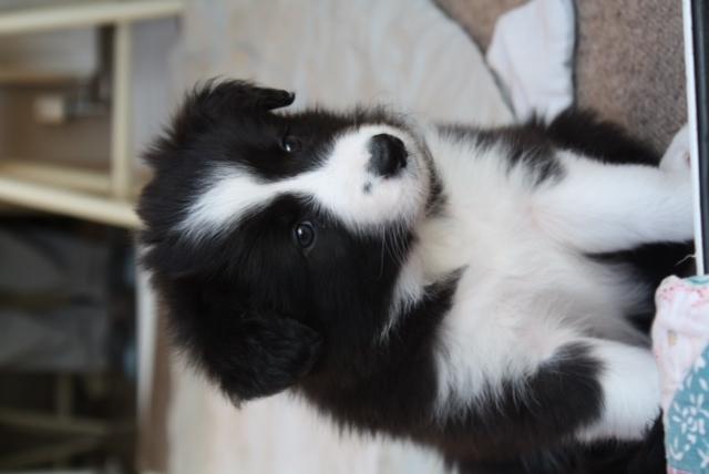 Pups (2)