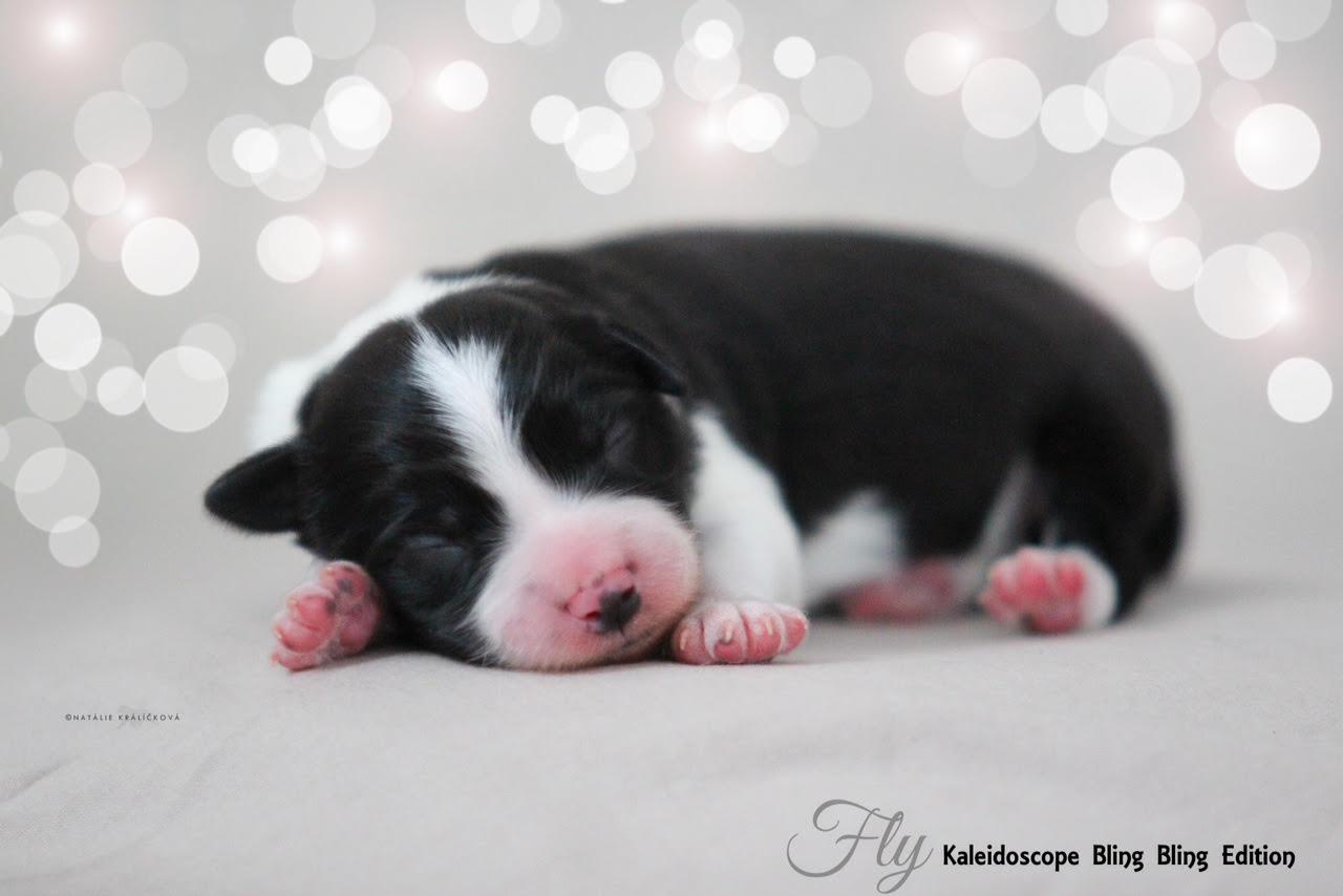 pups050203-tritons