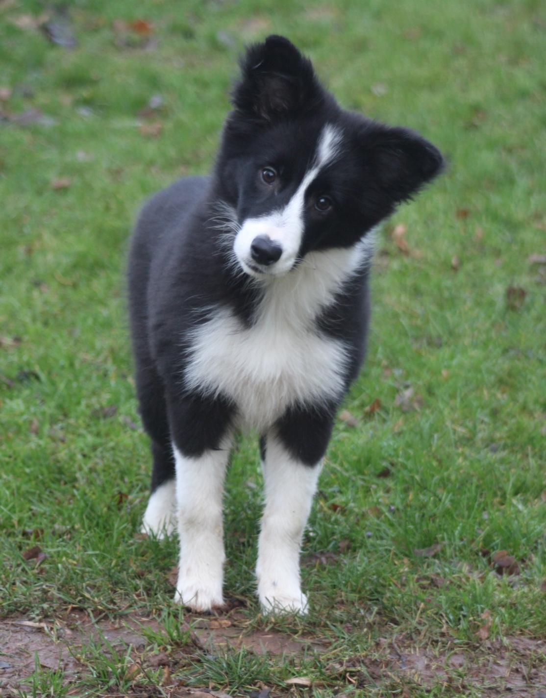 Pups20151231-1
