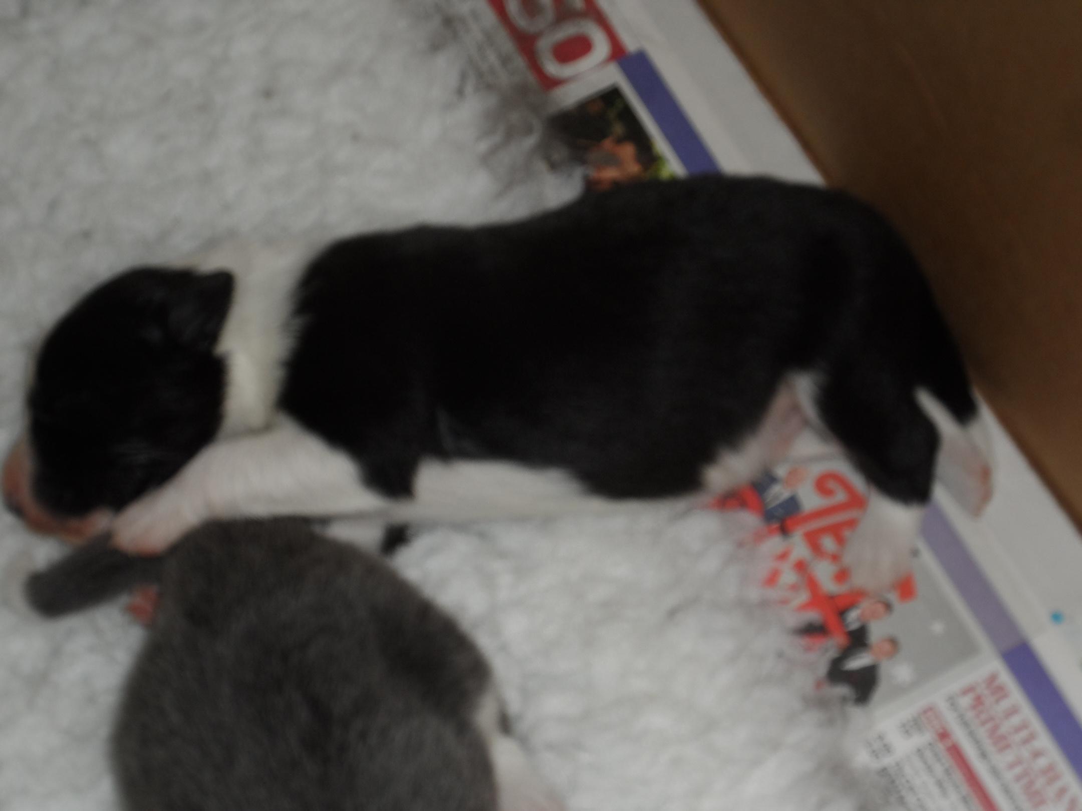 Pups (4)