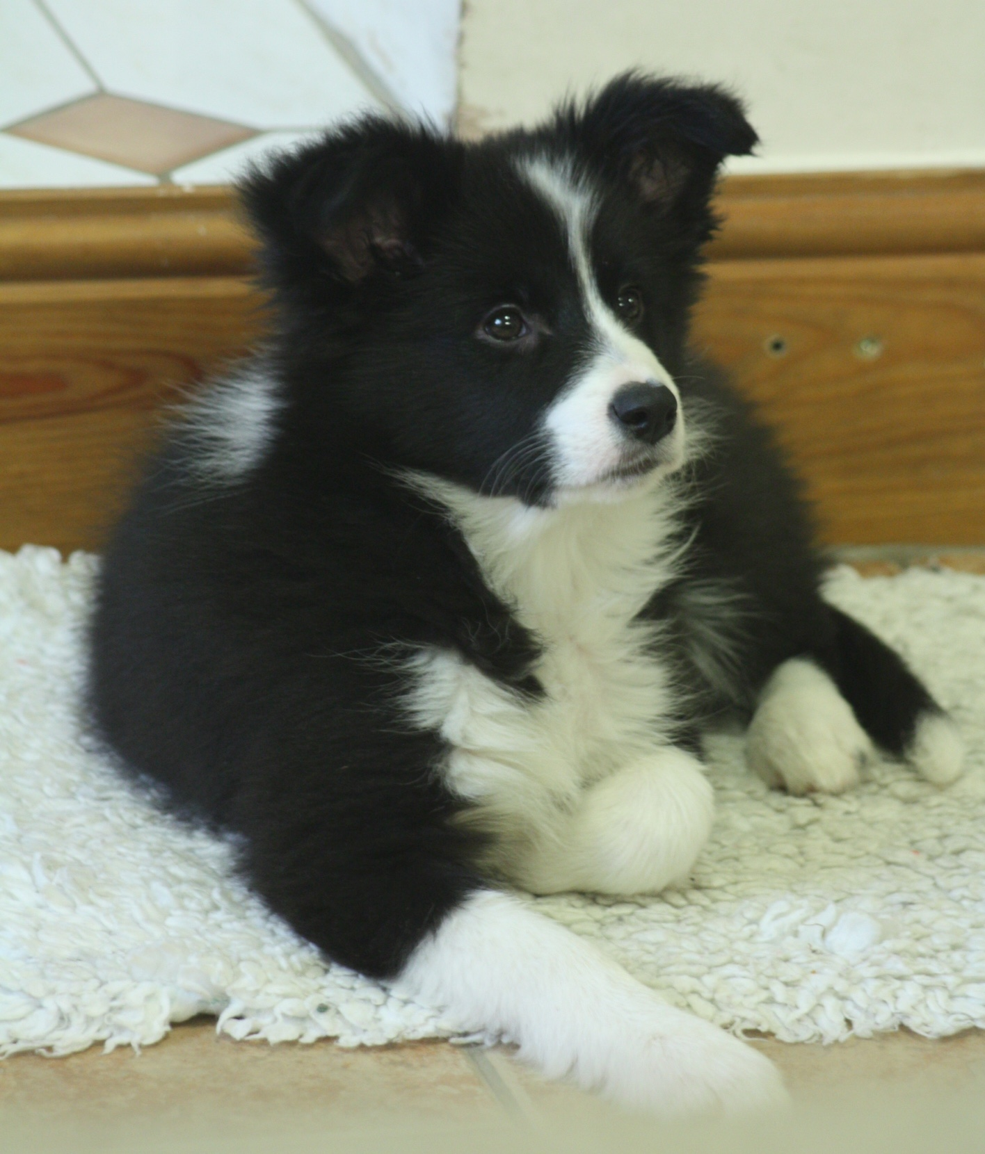 Pups20151231-10