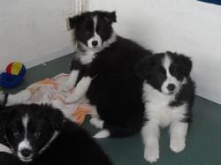 Pups20151231-5