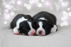 pups050202-tritons