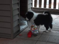 Pups20151231-4