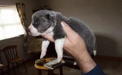 pups+at+2+weeks+2