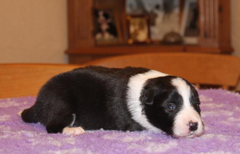pups+2+weeks+003