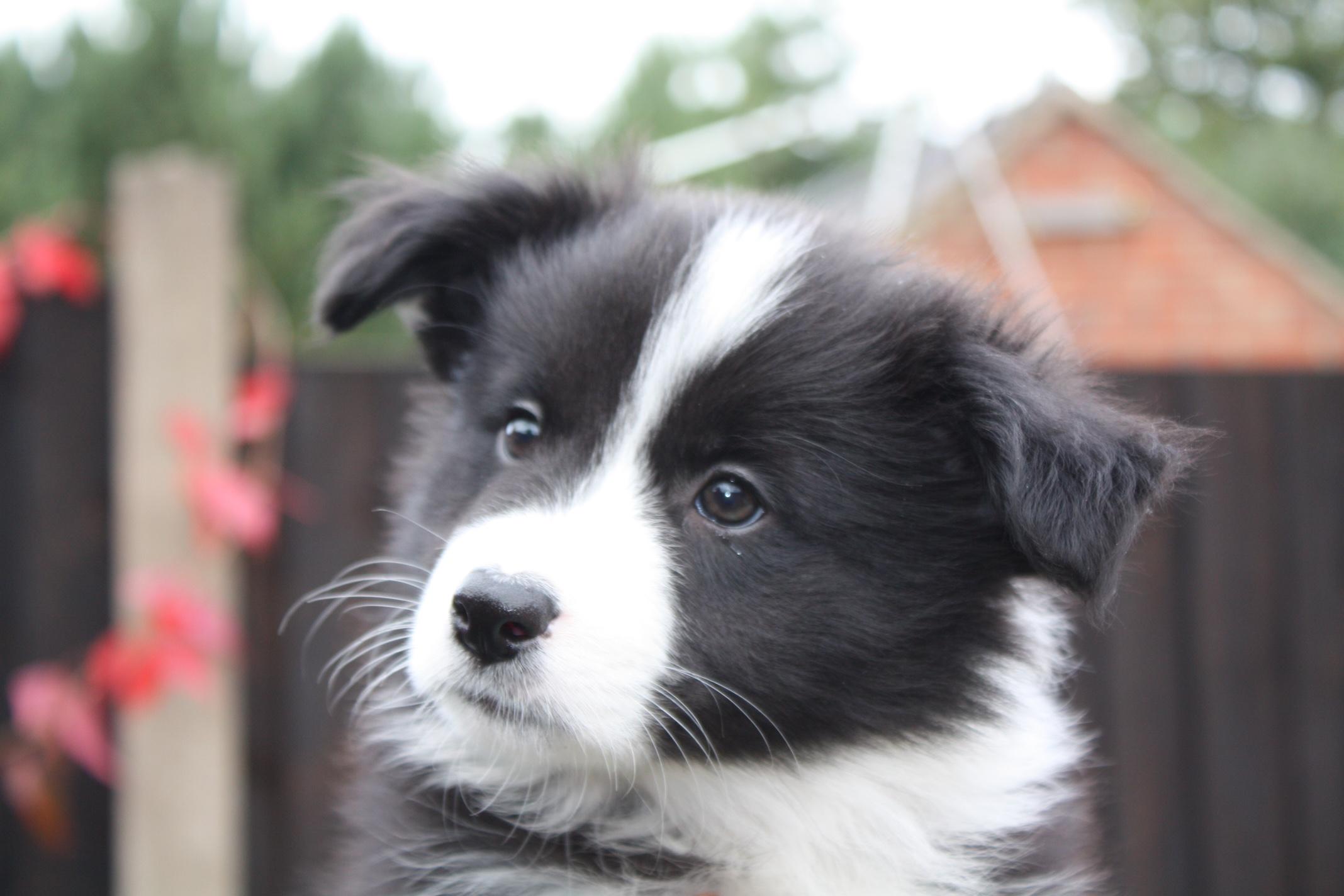 Pups20151231-7
