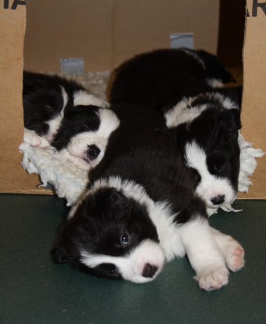 Pups20151231-9