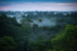 1024px-brazilian_amazon_rainforest.jpg