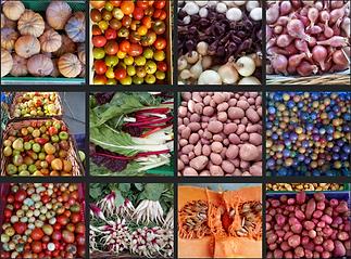 legumes jaffette 2.png