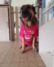 Cani passion toilettage.jpg