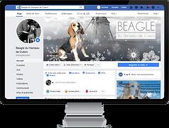 facebook Beagle du Hameau de Culem