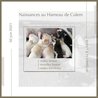 chiots beagles nés le 30 juin au hameau de Culem