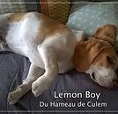 LEMON BOY DU HAMEAU DE CULEM
