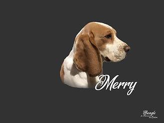 Merry du Hameau de Culem