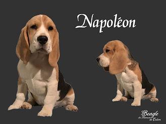 Napoléon du Hameau de Culem