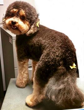 Pup-N-Cuts Pet Salon & Spa
