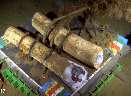 SubC Stories: Whale Bone Study Continues in Barkley Canyon with Subsea Camera Observatory