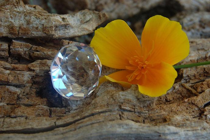 flower-5249819_1920.jpg