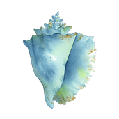 kisspng-conch-watercolor-painting-seashe