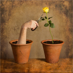 The Horticulturist_General