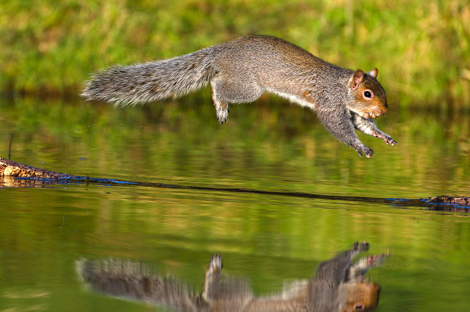 4_Leaping Squirrel_K Saunders