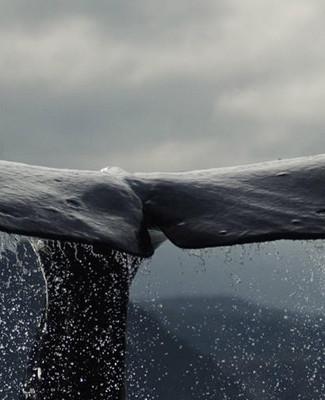HI-RES whale.jpg