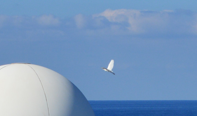 offshore bird 1.jpg