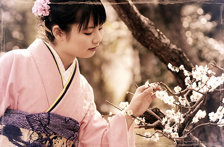 girl in pink kimono picking cherry-blossom