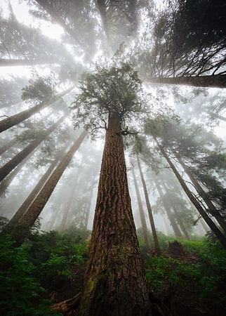 trees-to-the-sky-min.jpg.jpg
