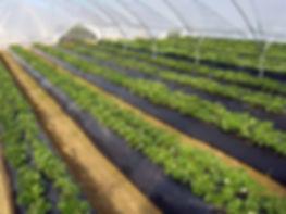 plastico agricola