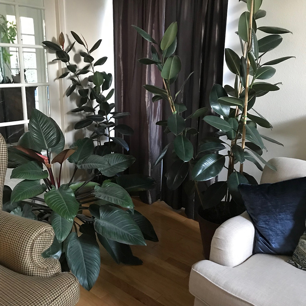 organic houseplants
