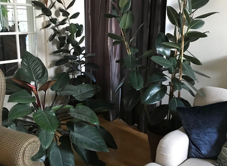 """Taking the """"House"""" out of Houseplants"""