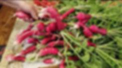Lisa Pruett's Radish grown in Malibu Com