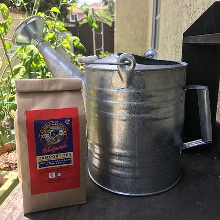 Tomato Compost Tea and Watering Can.jpg