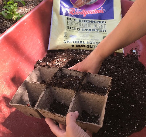 Fillling a 6-pack with Bu's Beginnings Seed Starter.jpg