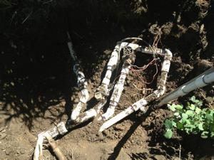 Botched Irrigation System