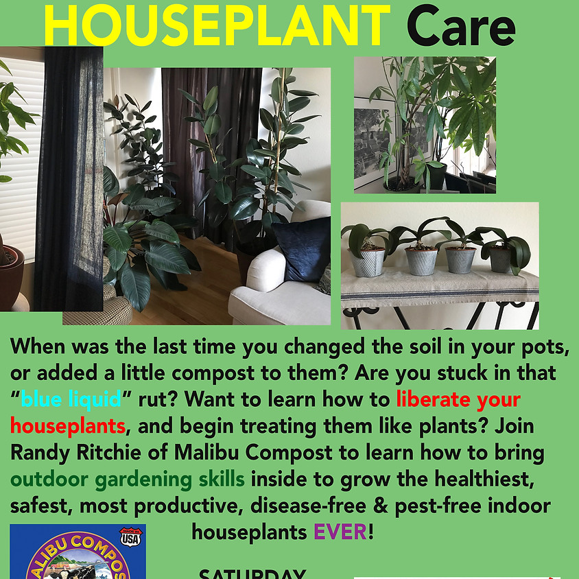 An Organic Guide to Houseplant Care
