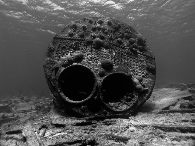 dive-bermuda-pollock-sheilds-boiler.jpg