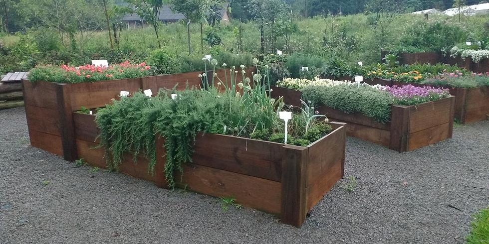 Jardim comestível e Horta em casa