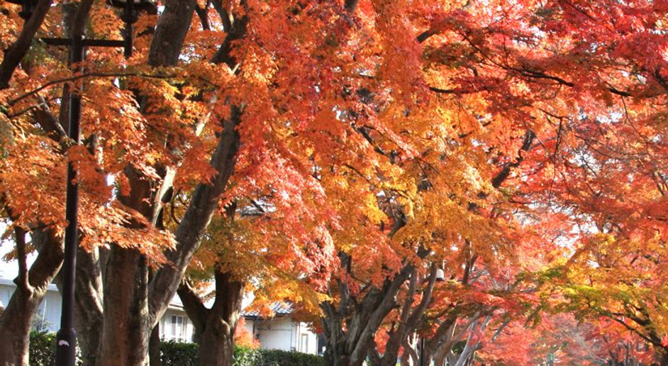 秋.png