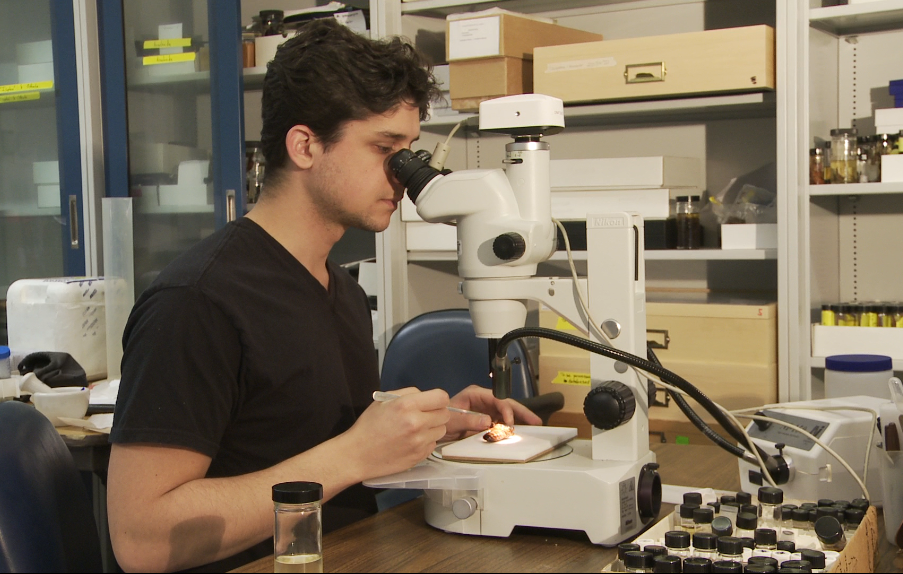 Dominic at work in the lab