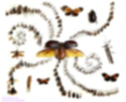 Insect Biodiversity